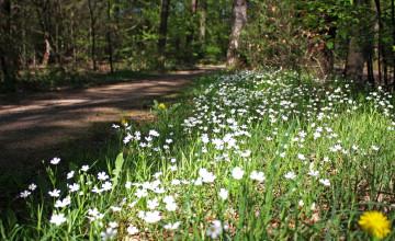Flora-excursie Gemeente Deventer